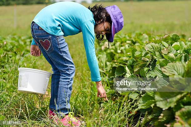 Indian Girl child during Strawberry Pickings event