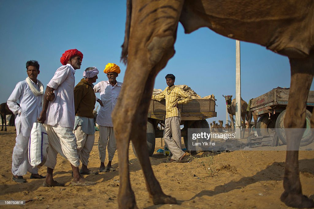 Indian herders negotiate for camels to buy during a camel fair on November 19, 2012 in Pushkar, India. The annual camel and livestock fair is held over five days, and attracts thousands of tourists.