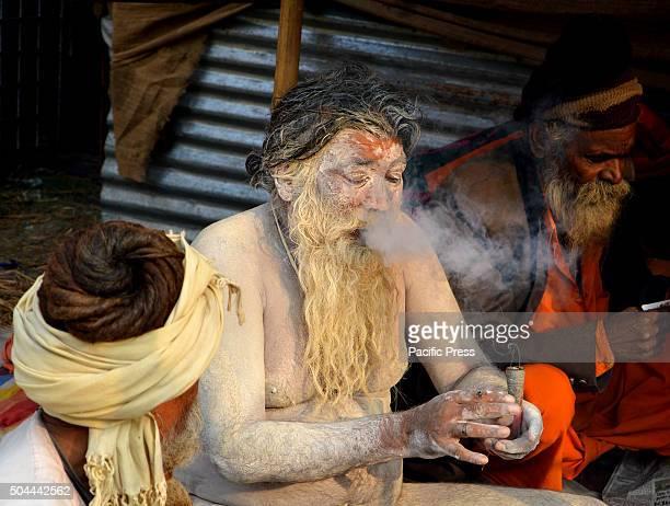 Indian Hindu Naga Sadhu smoking chillam in Gangasagar transit camp at KolkataSadhus form all over the country started to gather in Kolkata on their...