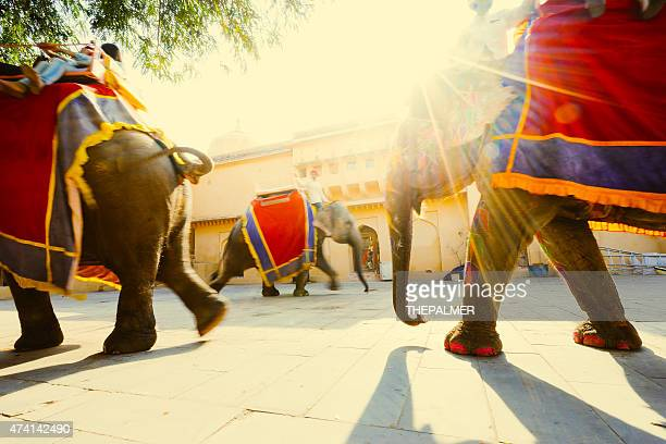 Holi Éléphant indien