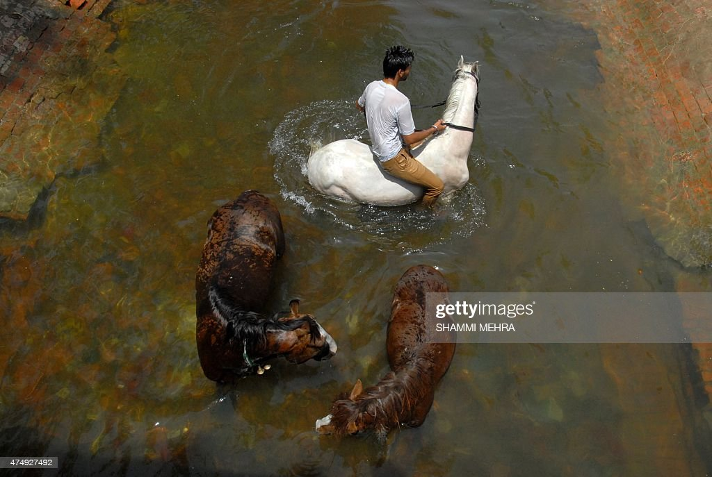 Indian horseman Rahul and his horses cool off in a canal on the outskirts of Jalandhar on May 28, 2015, as scorching weather conditions continue across India. More than 1,100 people have died in a blistering heatwave sweeping India, authorities said, as forecasters warned searing temperatures would continue.
