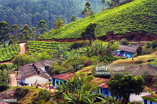 Indian houses within large tea plantations