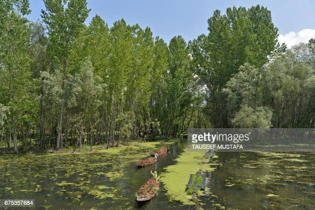 TOPSHOT Indian Kashmiri women row boats carrying lotus roots for cattle through the polluted waters of Dal Lake in Srinagar on May 1 2017 / AFP PHOTO...