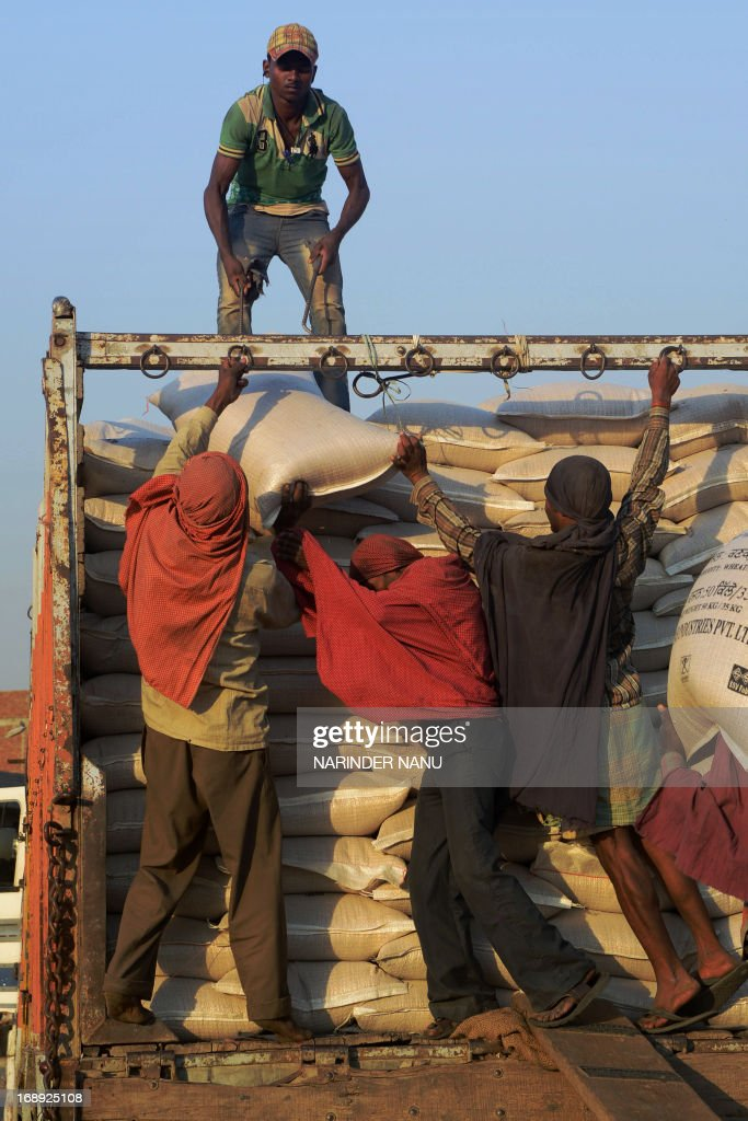 Indian labourers manouver a 50 kilo sack of wheat into a truck at a local grain distribution point in the outskirts of Amritsar on May 16, 2013. This years wheat harvest is expected to be more bountiful than last year, India's Agriculture Ministry said recently. India which is the second largest producer of wheat in the world is expected to produce about 93.6 million metric tons. Some reports estimate that this will mean a decrease in the local price of wheat and a boost in exports due to the large surplus of grain stored. AFP PHOTO/Narinder NANU
