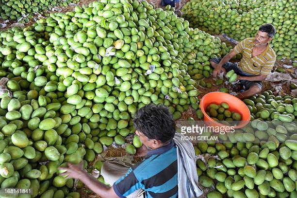 Indian labourers sort mangoes at the Gaddiannaram Fruit Market on the outskirts of Hyderabad on May 6 2013 The ruling Indian Congressled government...