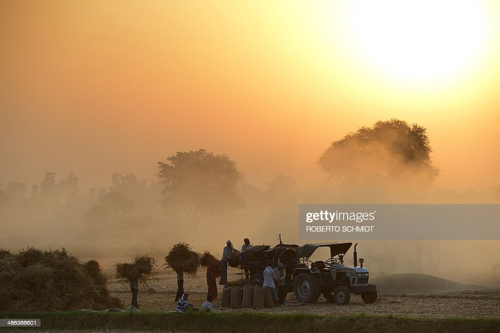 Indian labourers thrash cornflower stalks in a field in the early morning near the town of Tentigaon in the state of Uttar Pradesh on April 24, 2014. Over 70 percent of Indians depend on agricultural incomes and about 65 percent of India's farms depend on rains that fall between June and September. AFP PHOTO/Roberto SCHMIDT