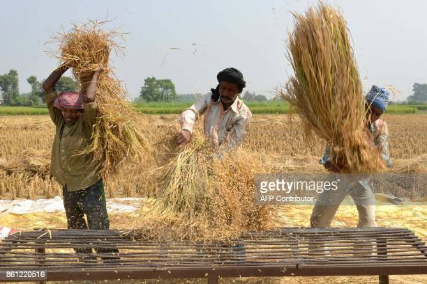 Indian labourers thresh rice in a field on the outskirts of Amritsar on October 14 2017 / AFP PHOTO / NARINDER NANU