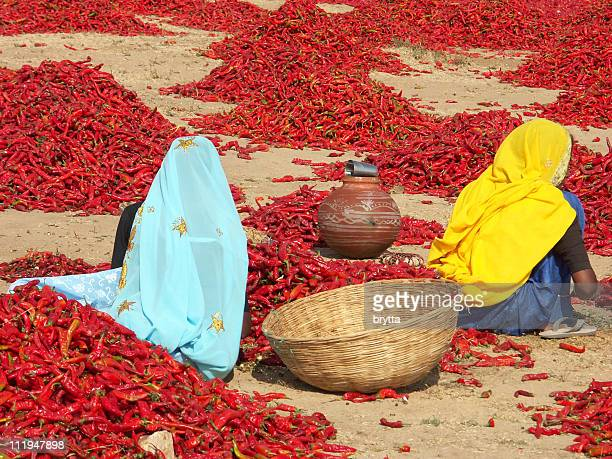 Indian ladies inspecting red chili peppers