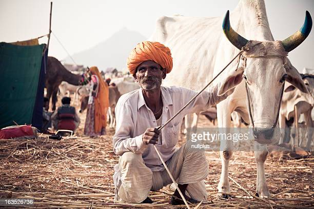 indian man with his cow at the pushkar fair