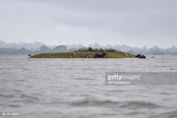 TOPSHOT Indian onehorn rhinoceros take shelter from flood waters on higher land at Kaziranga National Park about 250 kilometres east of Guwahati on...