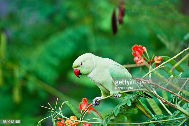hindu singles in parrott Or a kaffir with a parrot walks into a bar the bartender says, hey, where did you get that.