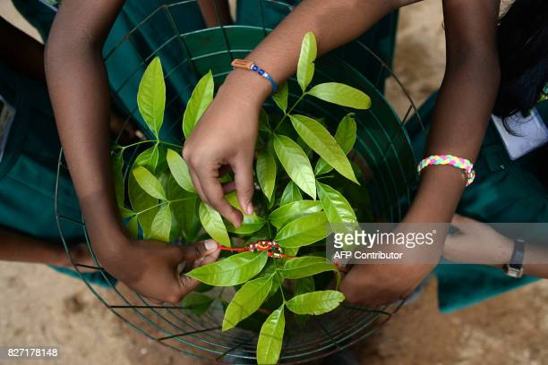 Indian schoolgirls pose for a photograph as they tie a sacred thread or rakhi onto a plant during an event to mark the festival of Raksha Bandhan in...
