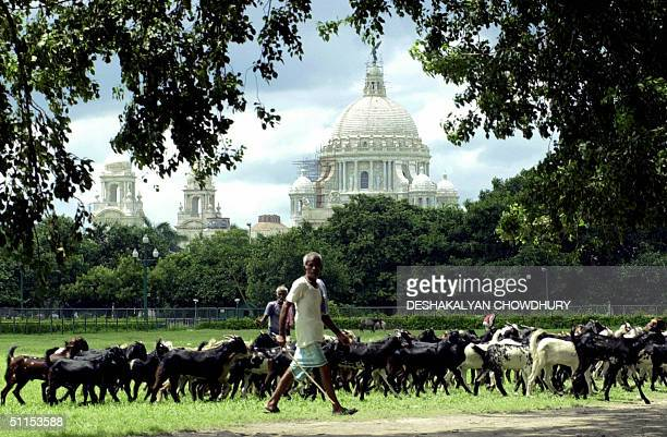 Indian shepherds Ratan and Binodh drive their flock of goats across a field in front of the Victoria Memorial in Calcutta09 August 2004 Both Ratan...