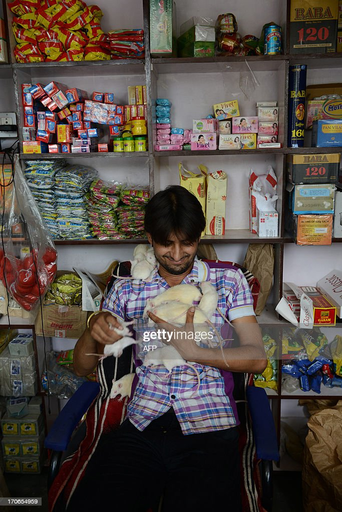Indian shop owner, Sonu Sharma, 26, plays with rats at his shop in Ahmedabad on June 16, 2013. Sonu, nicknamed the Ratman, has over 50 rats and at any given time there are at least 10 white mice crawling on him. He adopted four white rats over a year ago, since then they multiplied and he has kept many as pets. AFP PHOTO / Sam PANTHAKY