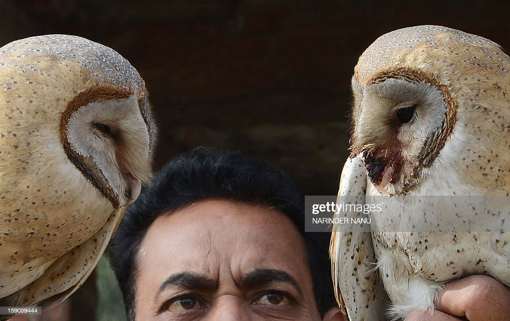 Indian Society for the Prevention of Cruelty to Animals (SPCA) inspector Ashok Joshi holds injured Barn Owls ,which was entangled in kite flying string in Amritsar on January 7, 2013. The Barn owls entangled in the kite string were rescued by SPCA members.