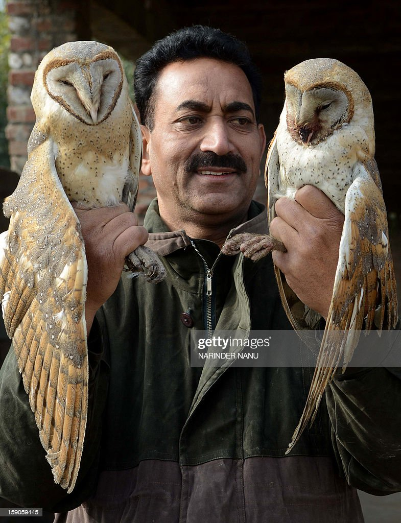 Indian Society for the Prevention of Cruelty to Animals (SPCA) inspector Ashok Joshi holds injured Barn Owls ,which was entangled in kite flying string in Amritsar on January 7, 2013. The Barn owls entangled in the kite string were rescued by SPCA members. AFP PHOTO/NARINDER NANU