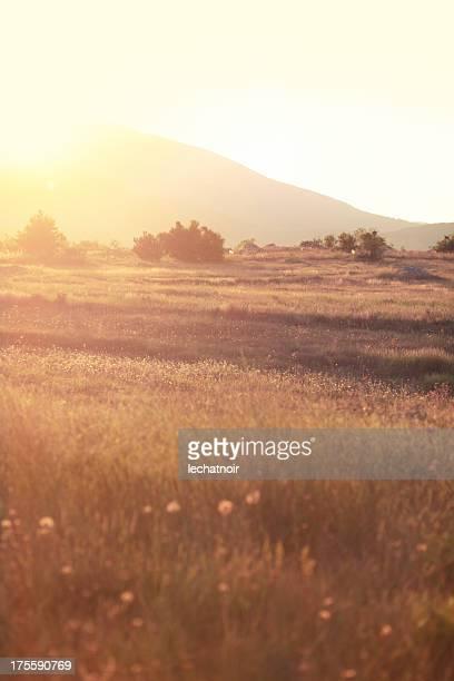 インディアンサマー自然の草地