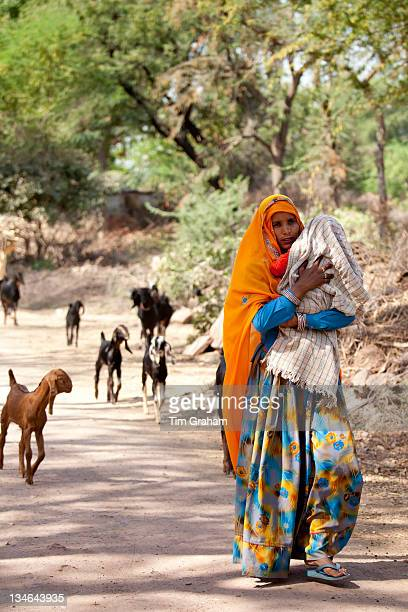 Indian villager leading herd of goats in village near Ranthambore in Rajasthan Northern India