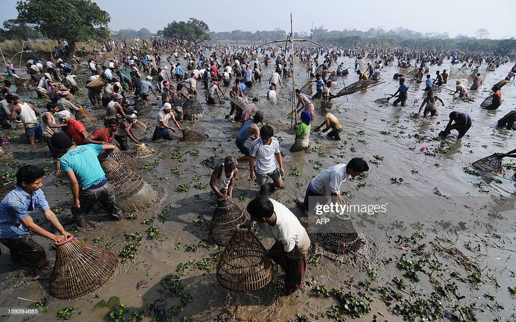 Indian villagers participate in community fishing during the Bhogali Bihu celebration at Goroimari Lake in Panbari village, some 50 kms from Guwahati on January 13, 2013. Bhogali Bihu is a harvest festival celebrated in Assam state which starts on January 13. AFP PHOTO/ Biju BORO