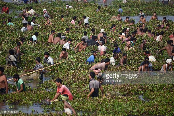 Indian villagers take part in a community fishing event during the Bhogali Bihu celebrations at Goroimari Lake in Panbari some 50 kms from Guwahati...