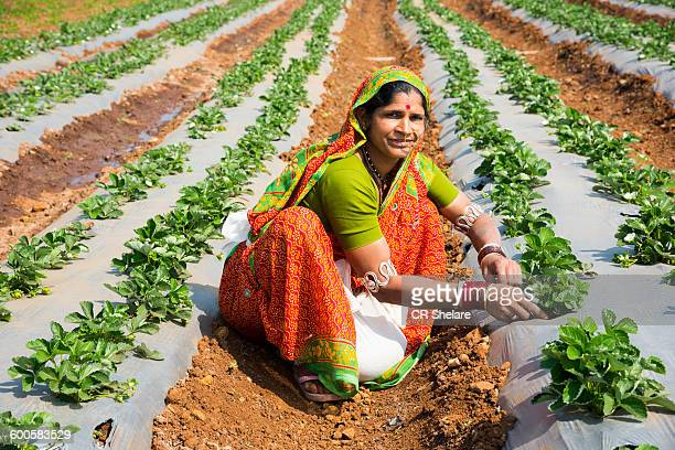 Indian woman Farmer working strawberry field