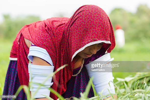 Indian women farmer working, Rajasthan, India.