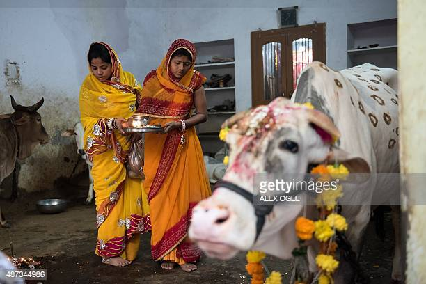 Indian women prepare to bless a cow during a Hindu Bach Baras ritual in the Rajasthan city of Udaipur on September 9 2015 The annual festival for cow...