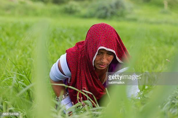 Indian women working in farm, Rajasthan, India
