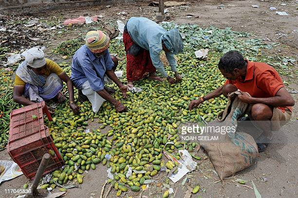 Indians collect rejected vegetables thrown away by vendors at a garbage dump near a wholesale vegetable market in Hyderabad on June 20 2011 India's...