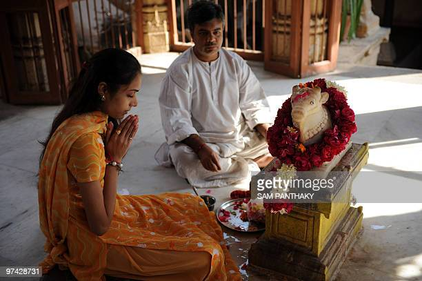 Indiasciencemedicineresearchcows FEATURE by Rupam Jain Nair In this February 1 2010 photograph an Indian woman performs the Nandi Puja ritual at the...