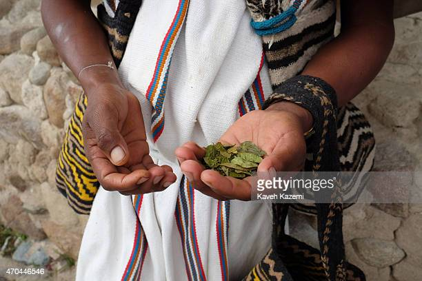 A indigenous Arhuaco man holds dried Coca leaves in his hand while standing with his colorful mochila handbags in front of a hut in the walled...