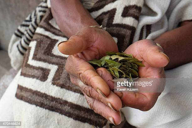 A indigenous Arhuaco man holds dried Coca leaves in his hands while sat in front of a hut in the walled village on January 23 2015 Nabusimake...