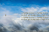 Individuality concept, birds on a wire alone against mass