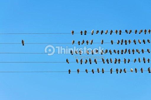 Individualität Konzept Vögel Auf Draht Stock-Foto | Thinkstock