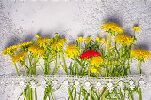 individuality concept: red dandelion between yellow ordinary ones, top view still life with copy space above.