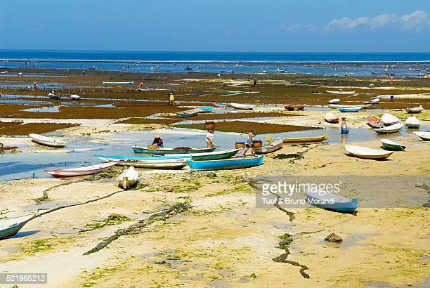Indonesia, Bali, Nusa Lembongan island, Alga cultivation