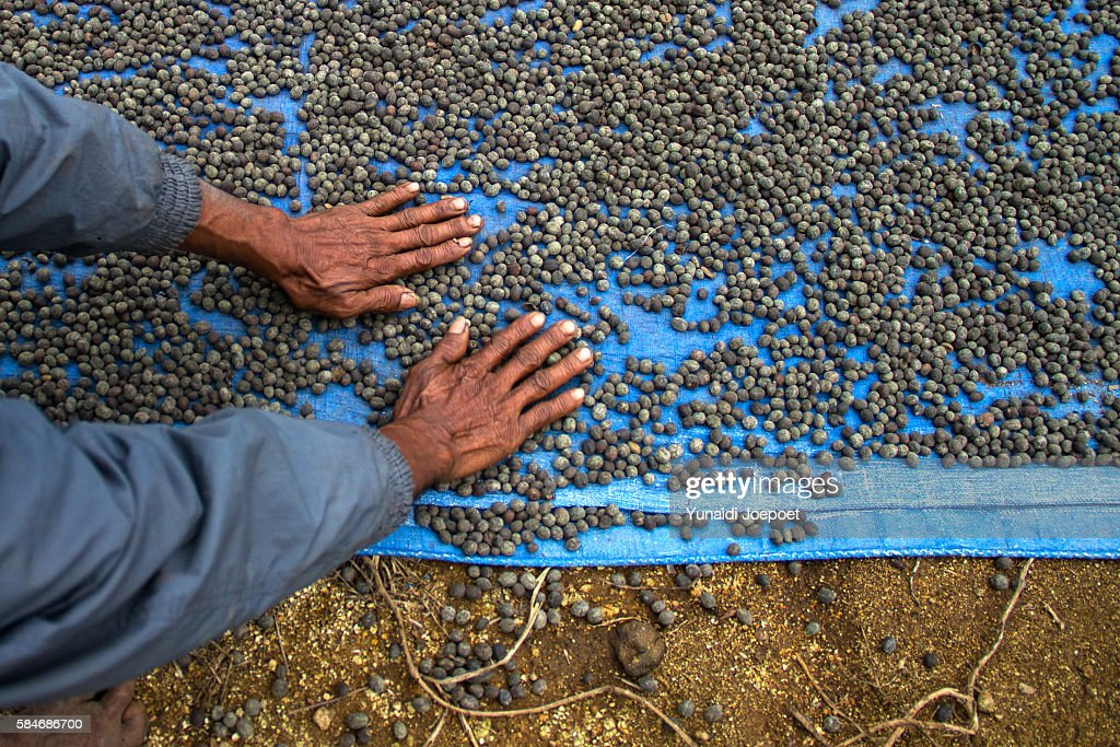 Indonesia, man holding freshly coffe beans