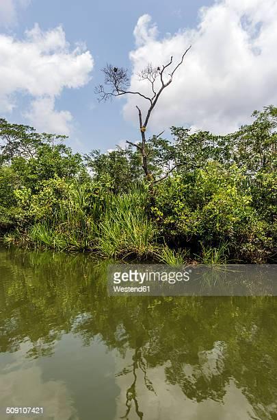 Indonesia, Riau Islands, Bintan Island, Mangrove trees
