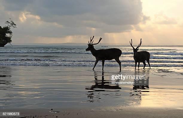 Indonesia, West Java, Pangandaran, Silhouette of Deer
