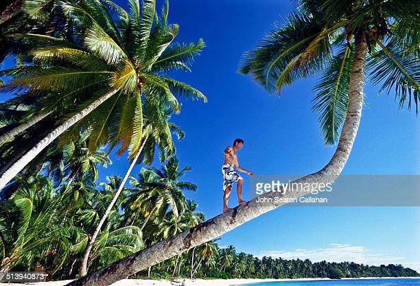 Indonesia West Sumatra Mentawai Islands man climbing coconut palm