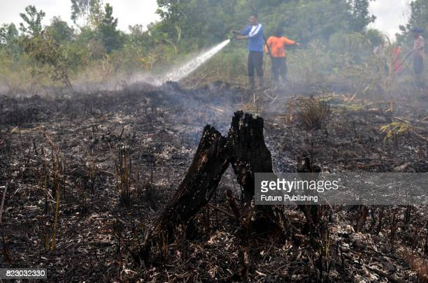 Indonesian fire fighting personnel try to extinguish a fire in the peat lands on July 26 2017 in Riau Indonesia Reports state that hundred of...