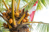 Indonesian Flag on coconut palm. Red and White. Bali island.