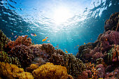 Underwater shot of vivid coral reef with fishes