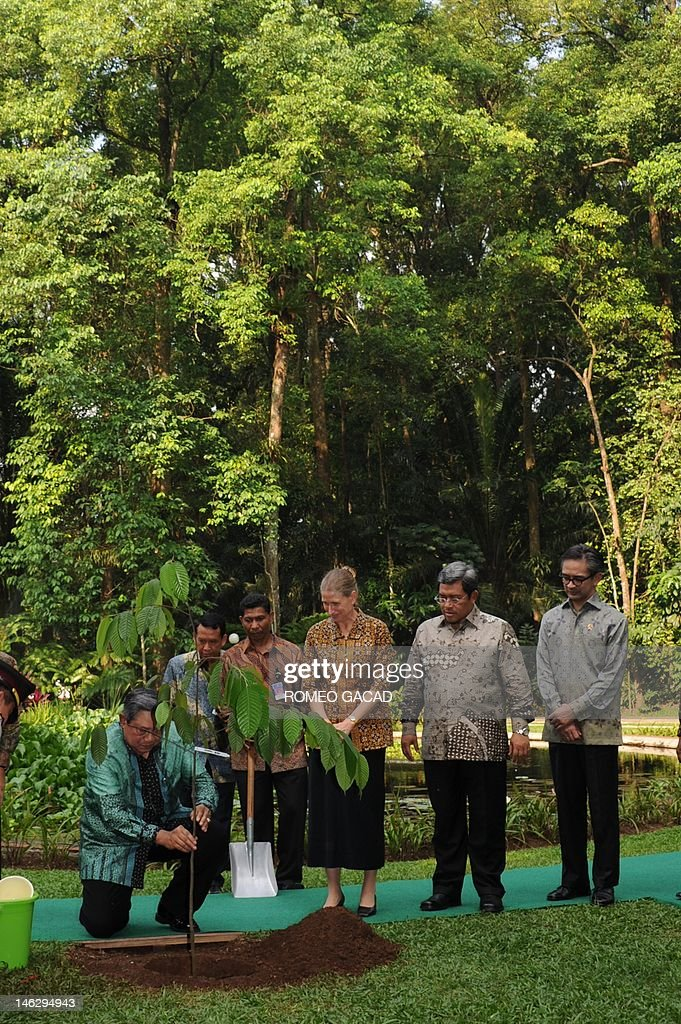 Indonesian President Susilo Bambang Yudhoyono (L) plants a tree seedling at the Center for International Forestry Research (CIFOR) in Bogor, West Java province on June 13, 2012 ahead of the Rio+20 summit while CIFOR Director General Frances Seymour, (3R), West Java Governor Ahmad Heryawan, (2R) and Foreign Minister Marty Natalegawa (extreme R) observe. In his address Yudhoyono said that the sustainable management of the world's forests is critical for equitable economic growth. Indonesia is often cited as the world's third-biggest emitter of greenhouse gases, due mainly to rampant deforestation by the palm oil, mining and paper industries. Indonesia is home to the world's third-largest area of tropical forests.
