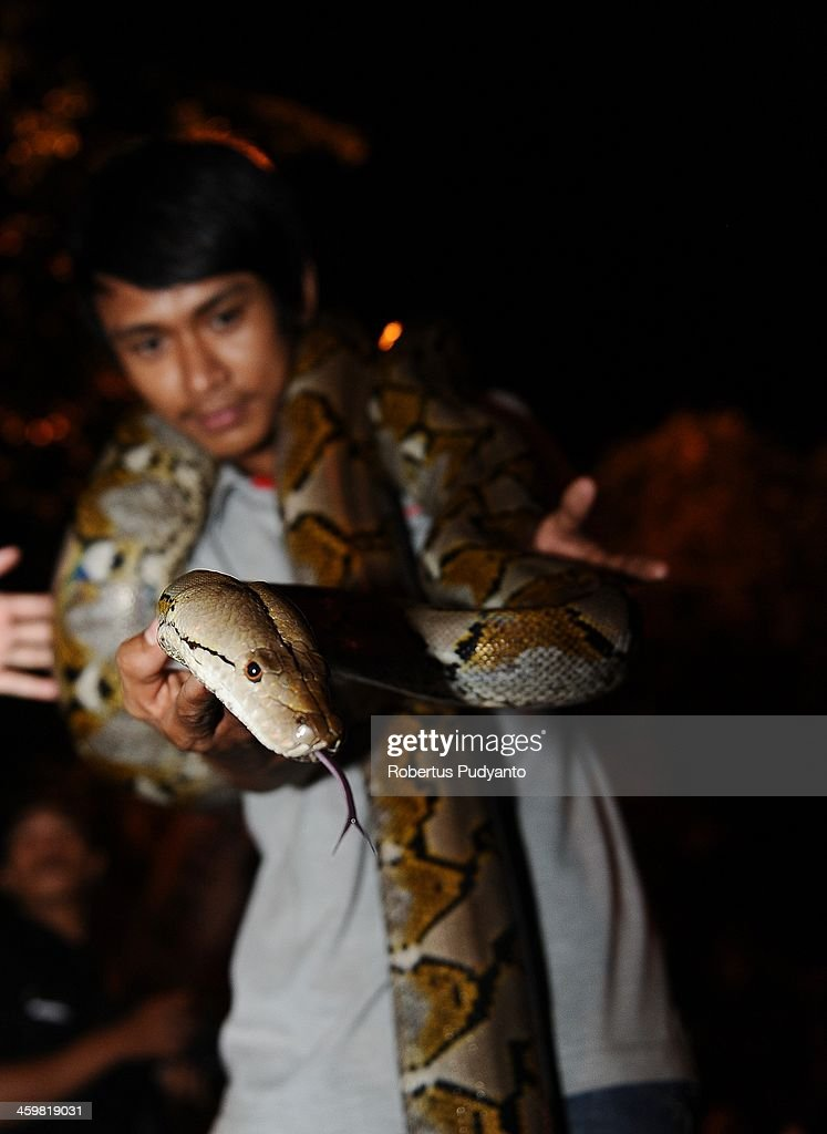 Indonesian Reptile Community showcase their pets to celebrate 2014 New Years on December 31, 2013 in Surabaya, Indonesia. A wave of pyrotechnic displays kicked off New Years celebrations in major cities around the world.