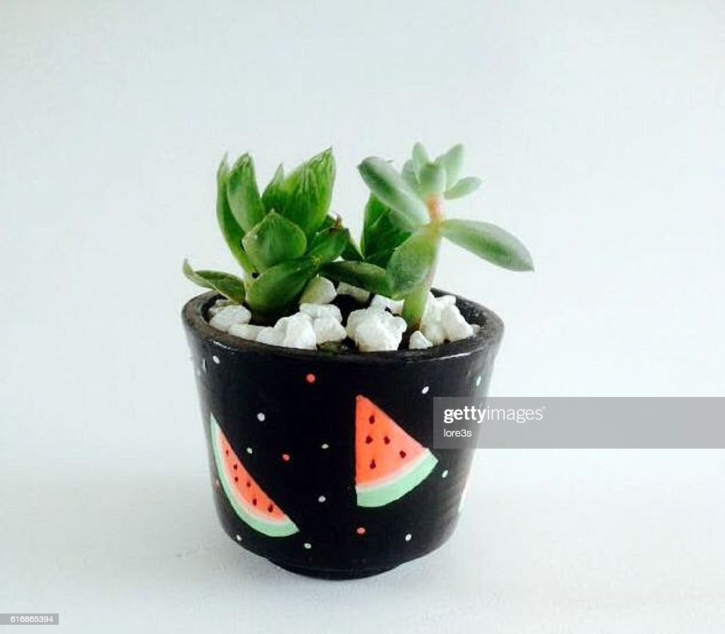 indoor decoration plants : Stock Photo