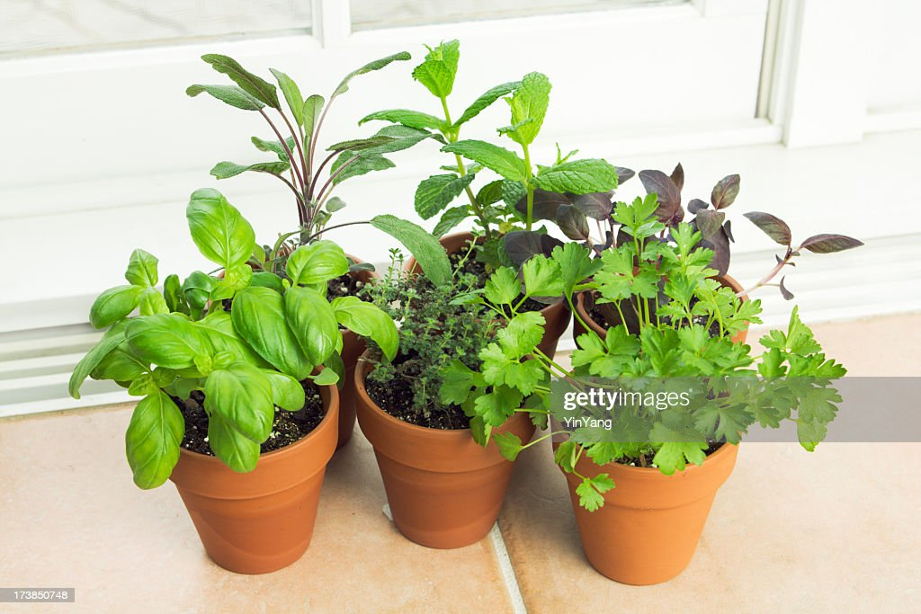 Indoor herb garden potted container plant by window sill stock photo getty images for How to grow an indoor herb garden