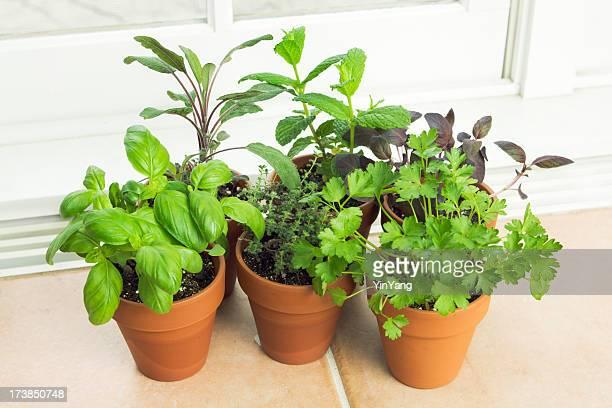 Im Kräutergarten, schöne Behälter Pflanze mit Fensterbank