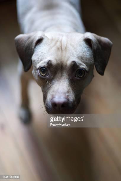 Indoor-Porträt eines kleinen Hundes nachschlagen Tageslicht