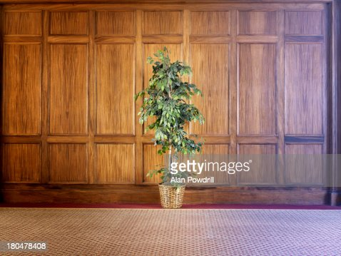 Indoor pot plant against wood paneling